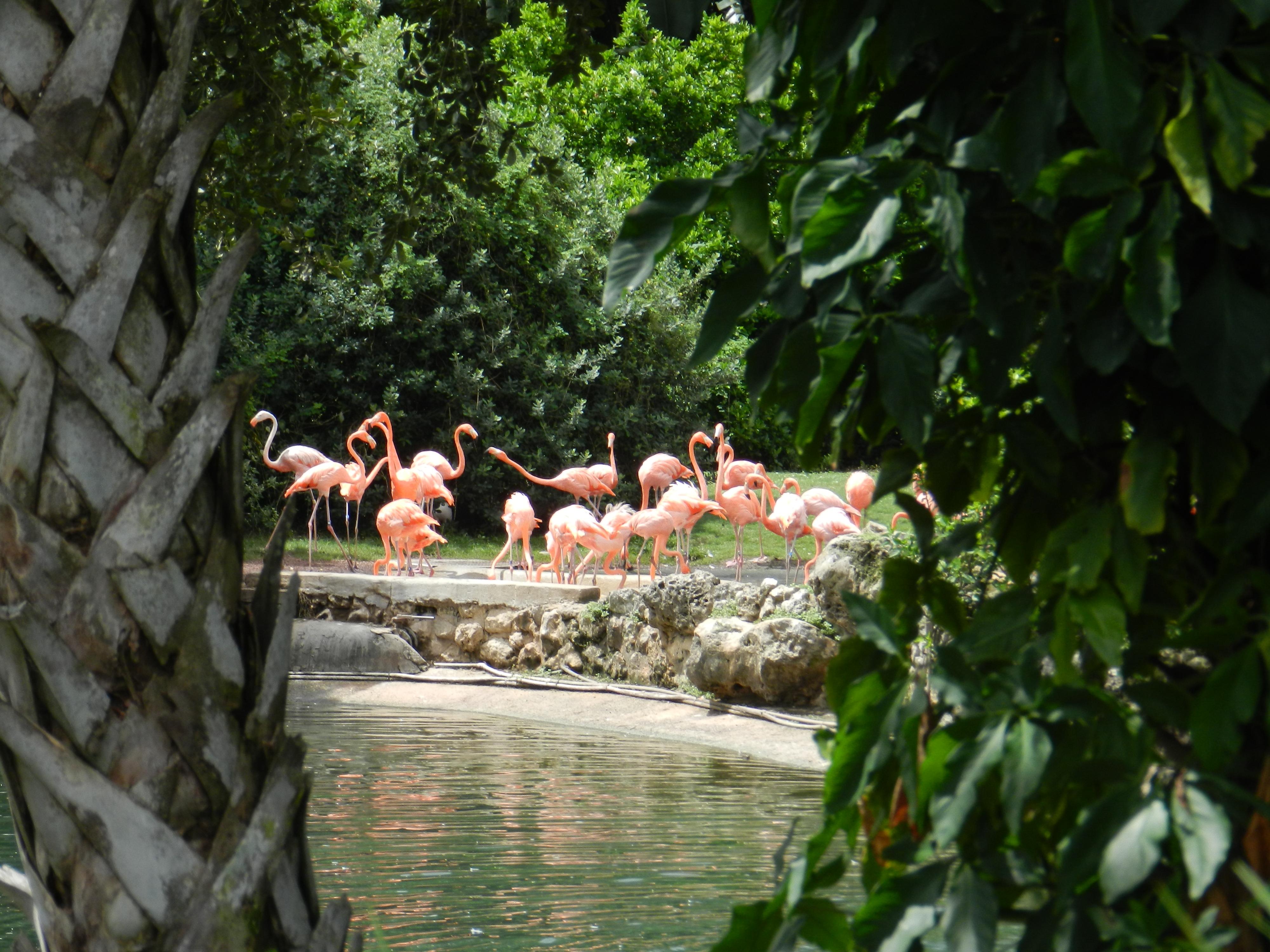 Busch Gardens Quiet Moments