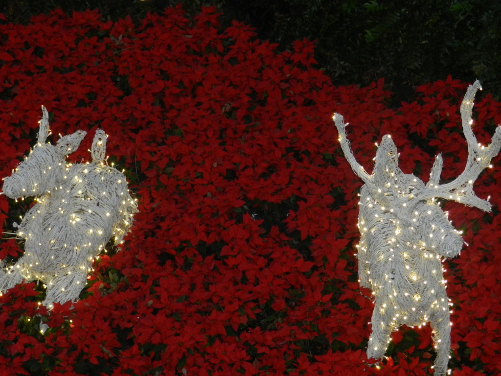 Christmas at the Grand Floridian Resort and Spa White Deer in Christmas Lights