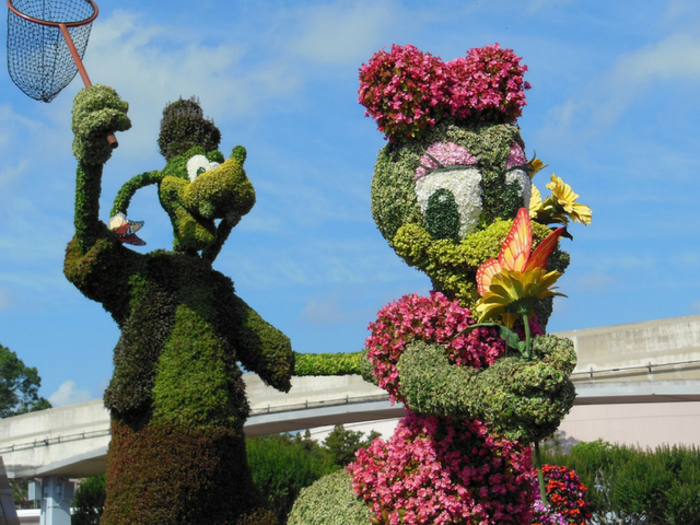 Epcot disney flower and garden festival with goofy and daisy topiary