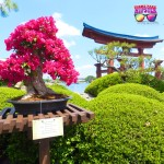 Epcot in the Spring with beautiful pink bonsai plant for Flower and Garden Festival. Japan Pavilion 2015.