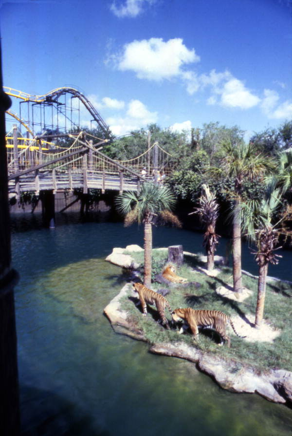 Python Roller Coaster at Busch Gardens Tampa Yellow Arrow Development