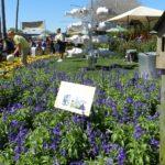 Flower and Garden Festival 2016