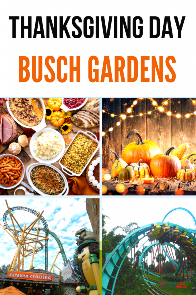 Busch Gardens at Thanksgiving Day Dinner with Colorful Roller Coasters and Orange Pumpkins and Pumpkin Pie