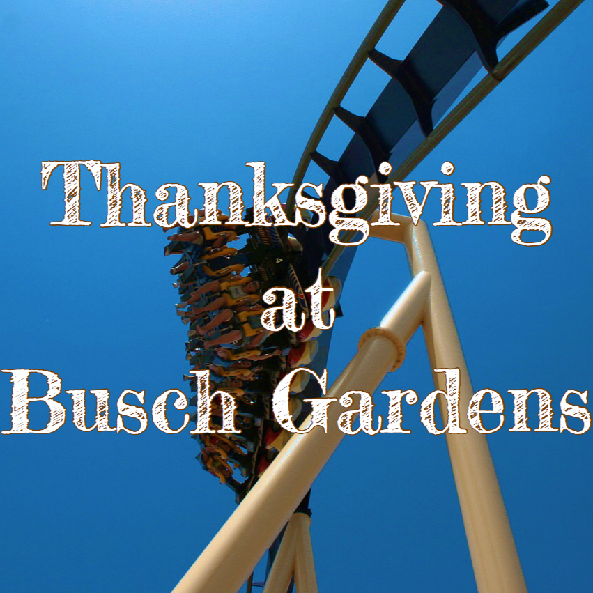 Thanksgiving Day Busch Gardens with Blue Montu Roller Coaster