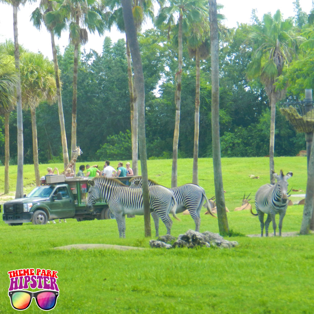Safari Tour at Busch Gardens Serengeti with zebra next to truck