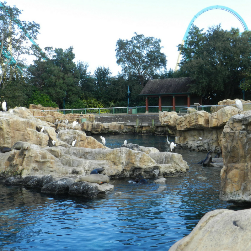 SeaWorld tours are a great way to see another side of the park. Birds perched on rocks overlooking Manta roller coaster.