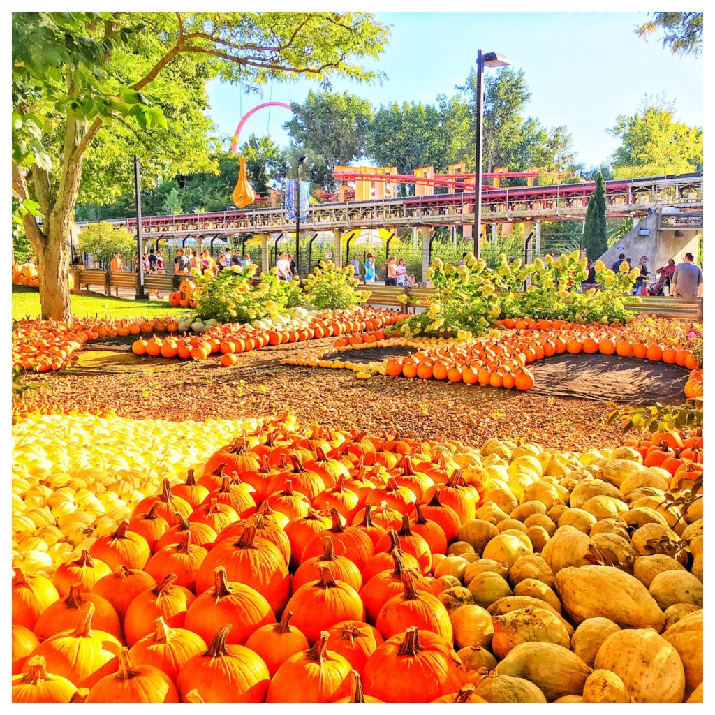 Cedar Point in the Fall with pumpkins and Top Speed Dragster