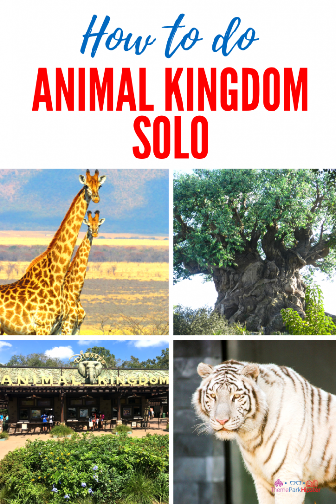 Tips for Doing Disney's Animal Kingdom solo with tree of life and giraffes looking directly at the camera.