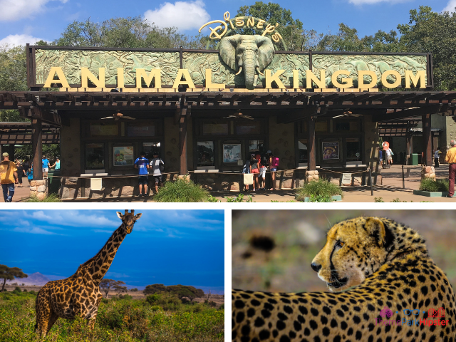 Disney Animal Kingdom SOLO. #DisneyTips #DisneyWorld #AnimalKingdom #DisneyPlanning #SoloTravel #DisneySolo