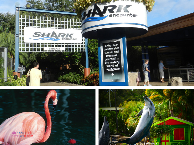 SeaWorld Solo Tips with dolphins and more animals to see. #SeaWorld #orlando #themepark