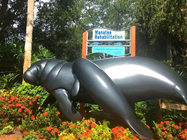 SeaWorld Orlando Manatee Rehab