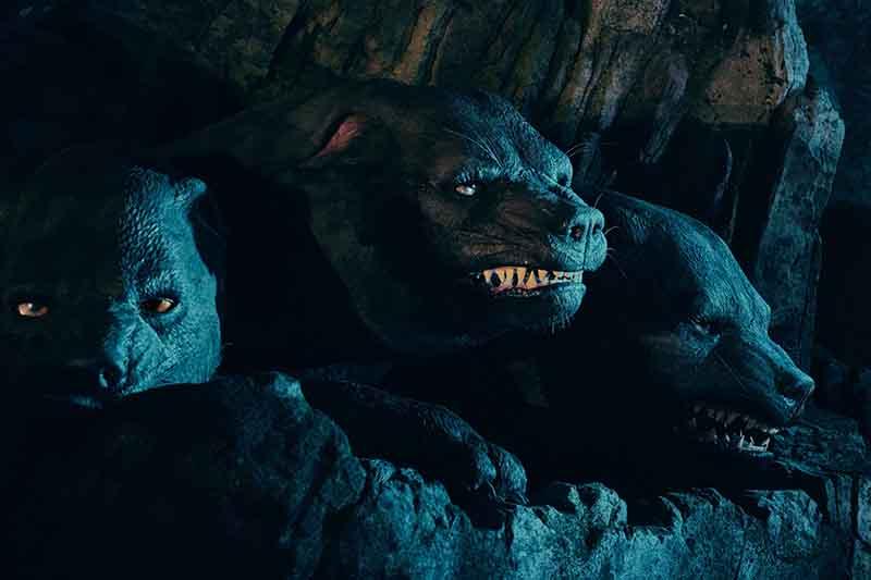 Fluffy the Three Headed Dog  Wizarding World of Harry Potter