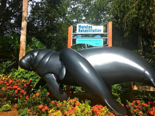 SeaWorld Orlando Manatee Rehabilitation