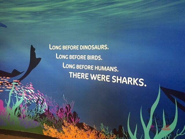 SeaWorld Orlando Shark Mural
