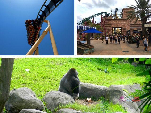 Montu Busch Gardens Tampa Roller Coaster