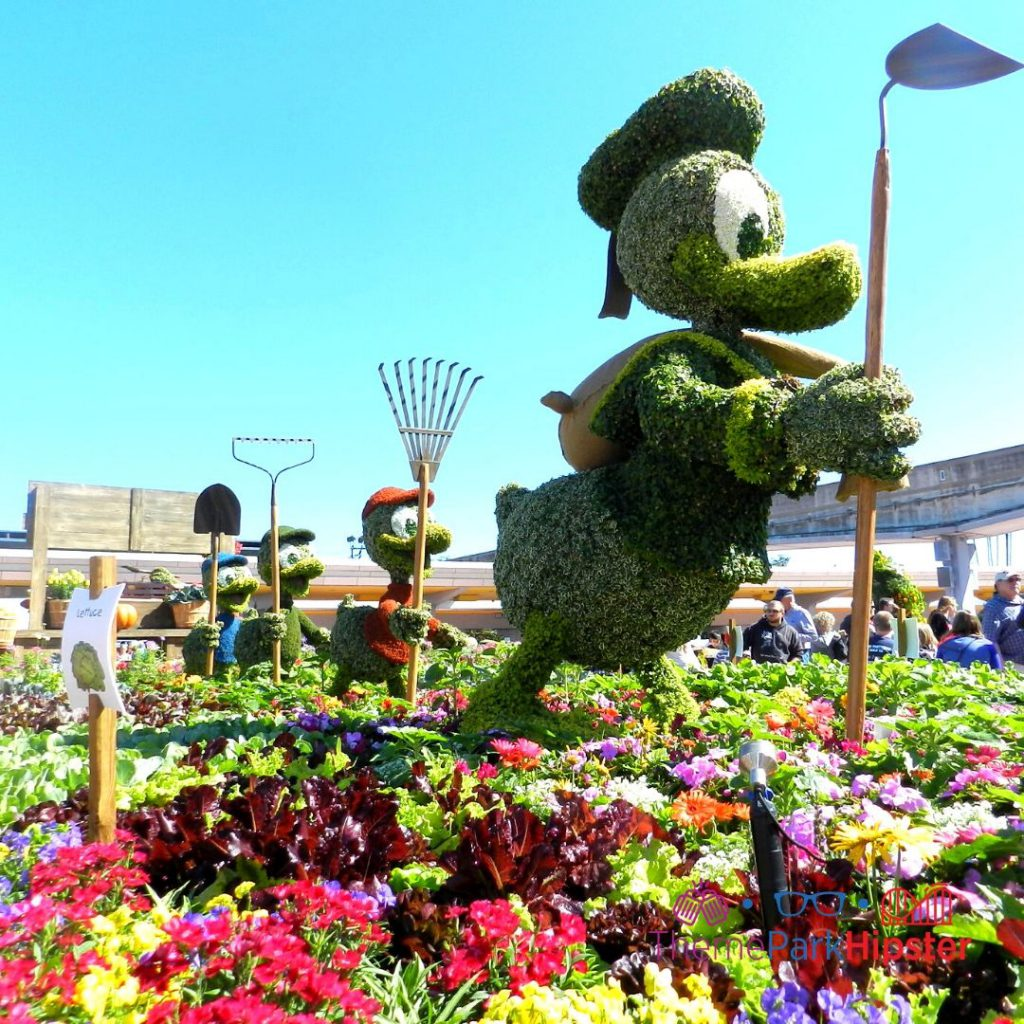 Epcot Flower and Garden Festival Donald Duck Huey and Dewey Topiary