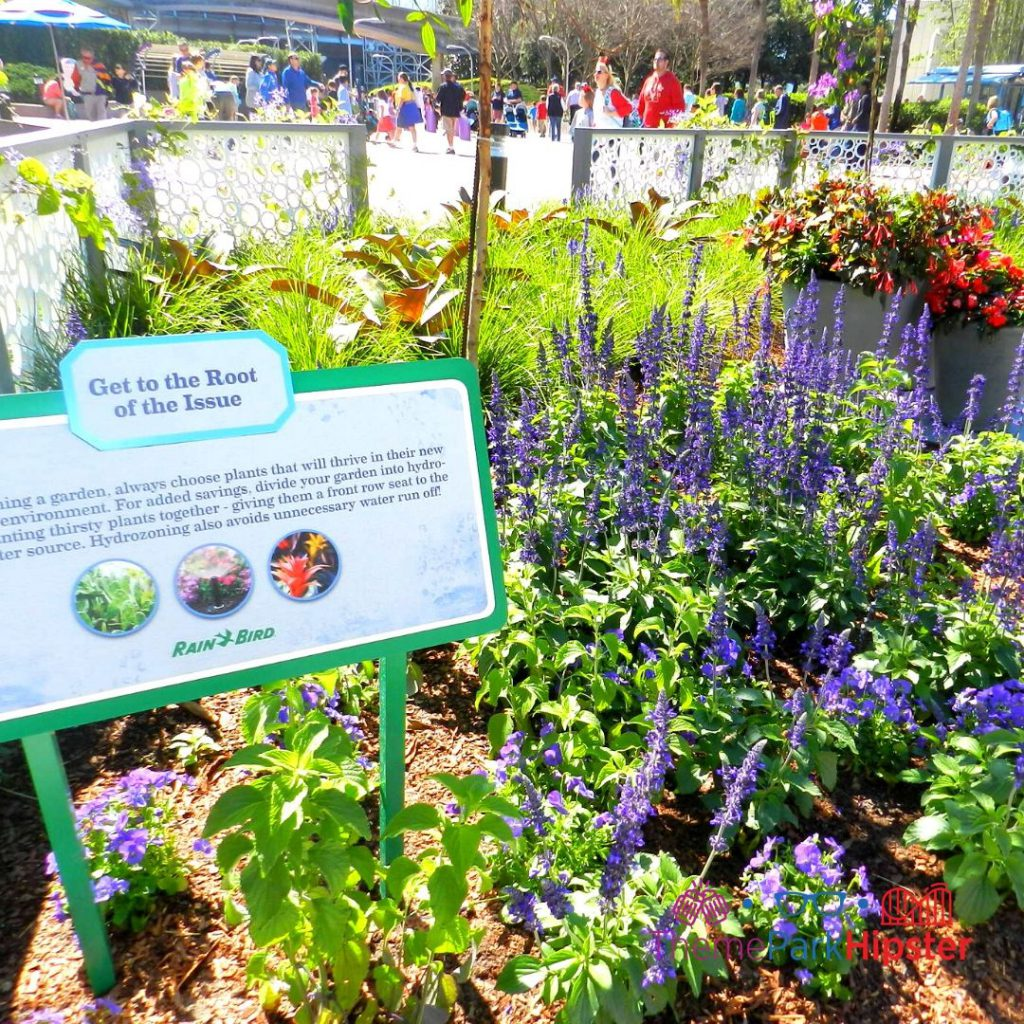 Epcot Flower and Garden Festival Garden Area