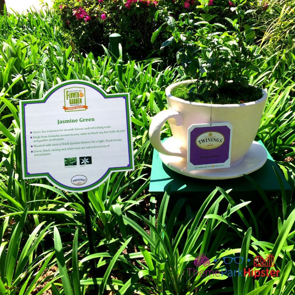 Epcot Flower and Garden Festival Tea Garden in UK Pavilion