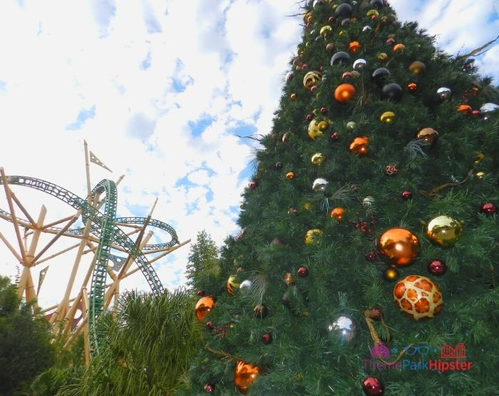 Cheetah Hunt Roller Coaster at Busch Gardens during Christmas