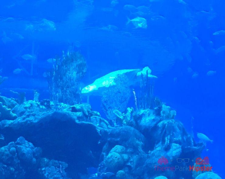 Coral Reef at Epcot Crab Aquarium View