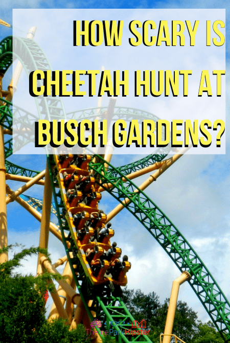 how scary is cheetah hunt at busch gardens