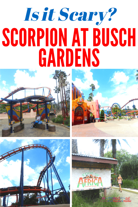 Is Scorpion Roller Coaster a scary ride at Busch Gardens Tampa