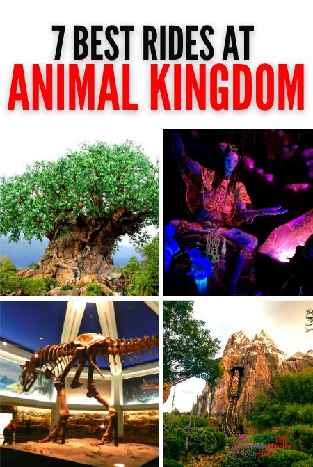 7 best rides at Disney's animal kingdom