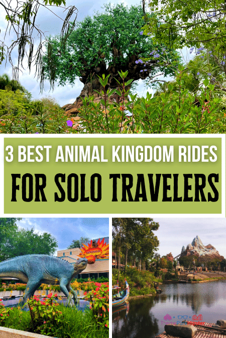 Best Animal Kingdom Rides for Solo Travelers with Tree of Life in the Background