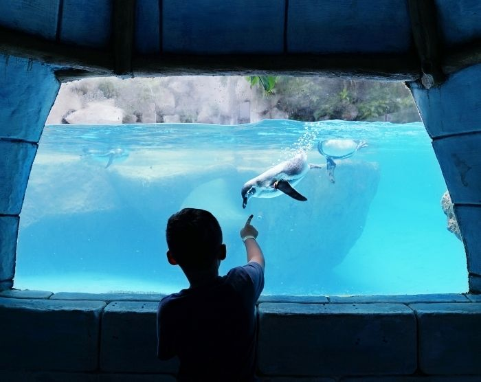 Penguins at SeaWorld with child watching