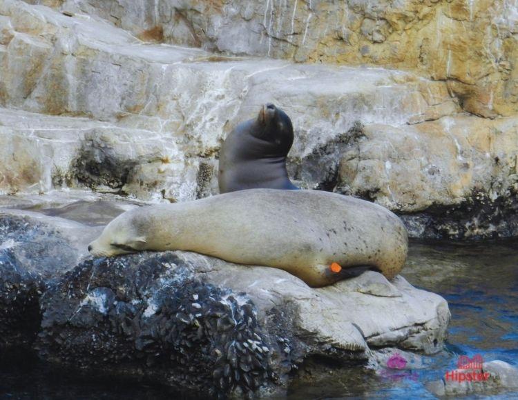 SeaWorld Orlando Pacific Point Preserve Seals