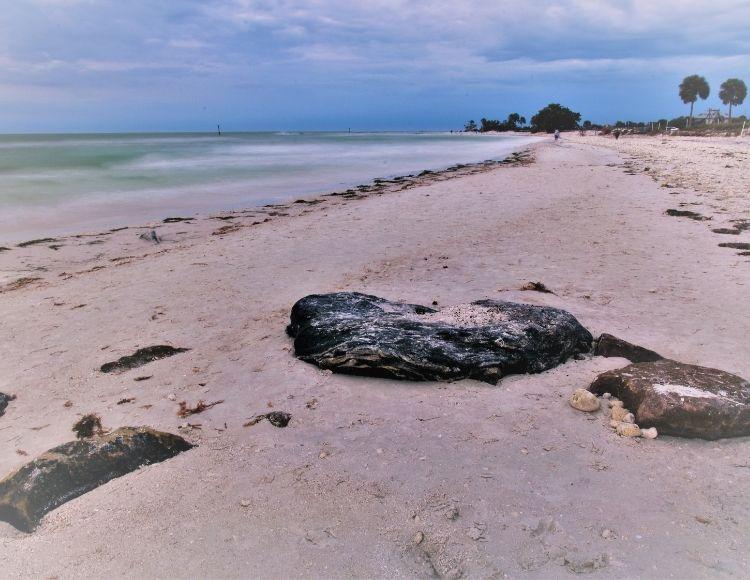 Honeymoon Island State Park on Florida Gulf Coast. Making it the best beach close to Disney.