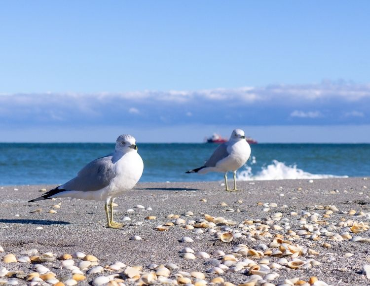 Jupiter Beach Florida with Seagulls. Making it the best beach close to Disney.