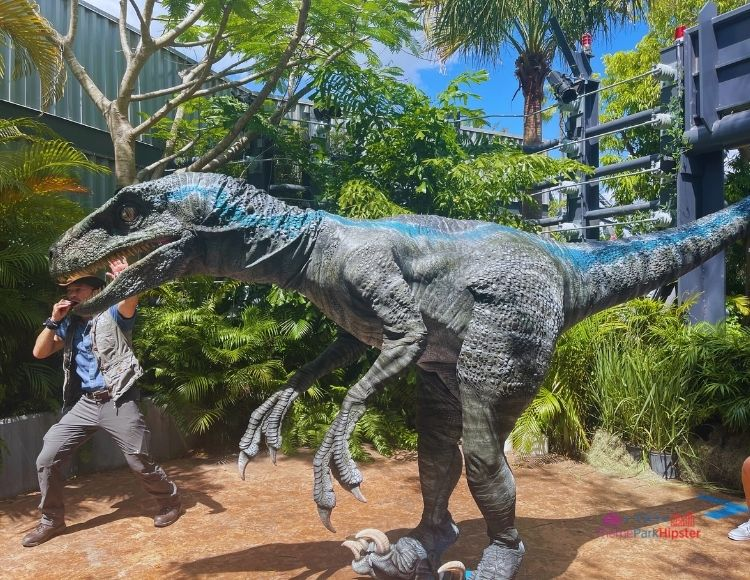 Raptor Encounter Trainer and Blue at Universal Jurassic Park