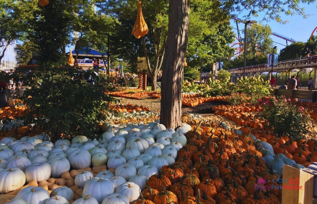 Cedar Point Halloweekends Pumpkin Patch