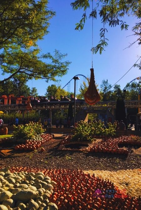 Cedar Point Halloweekends pumpkin patch in front of Top Thrill Dragster